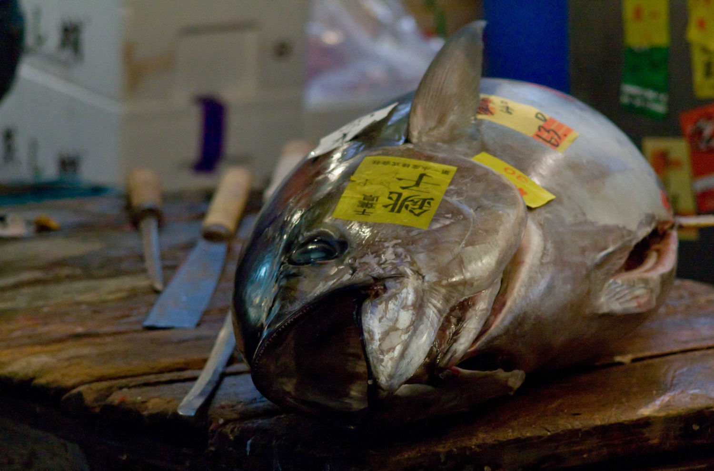 Tuna -Tsukiji Fish Market, Tokyo - 2012_