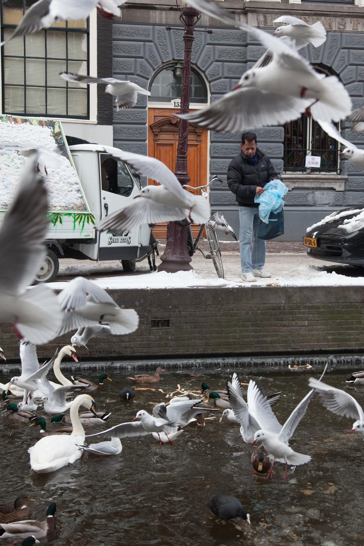 Bird Feeder - Amsterdam - 2013