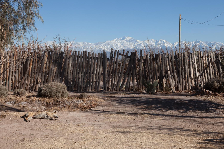 Lazy Dog - Mendoza, Argentina - 2014
