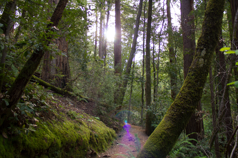 Trail - Marin County, California - 2015