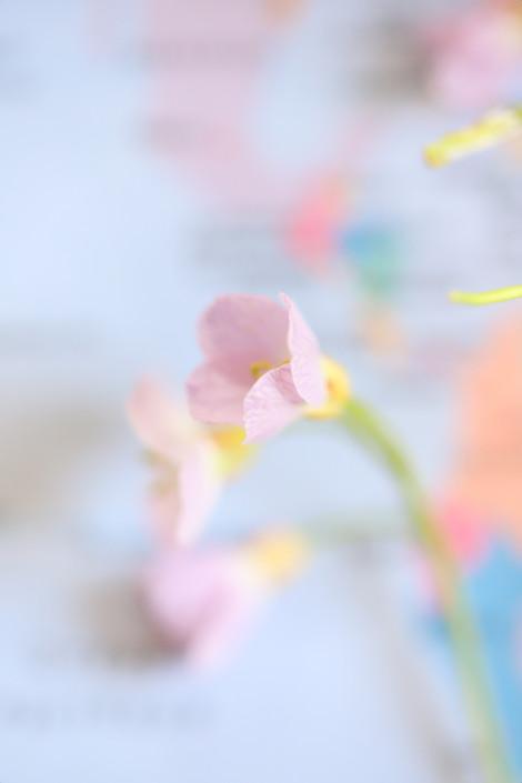 """Tirage Fine Art """"Pastels"""" Virginie KLOCK 3iphotographie"""