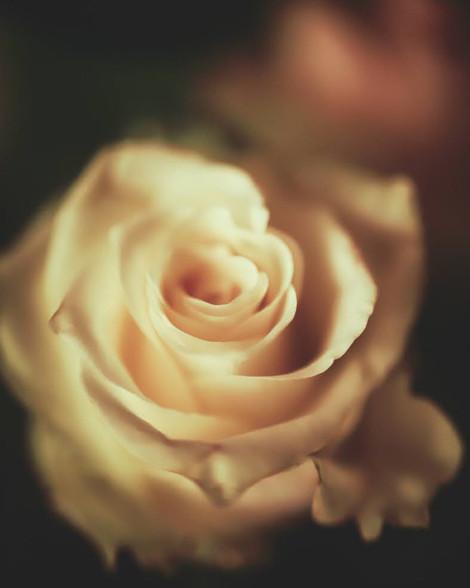 """Tirage Fine Art """"Be my Valentine"""""""" Virginie KLOCK 3iphotographie"""