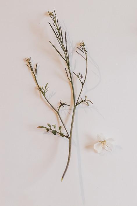 """Tirage Fine Art """"brindille et fleur de cerisier"""". Virginie Klock"""