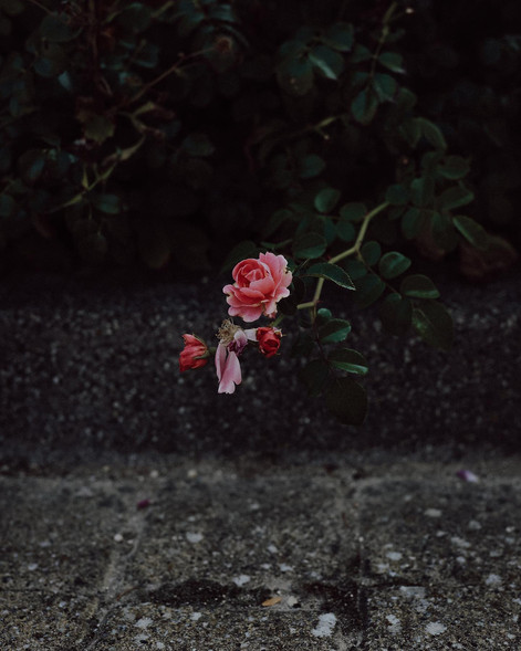"""Tirage Fine Art """"Inspiration"""" Virginie KLOCK 3iphotographie"""