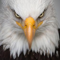 Shamanic Eagle Journey