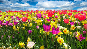 Spring and its impact on your Liver and Gallbladder...