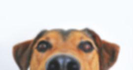 cynoscan détection canine