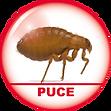 puce lyon