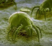 désinfection rhone lyon microbe virus acarien nuisible
