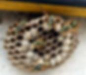 désinsectisation cafard blatte rhone lyon nuisibles