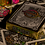 Thumbnail: London Diffractor Gold Playing Cards
