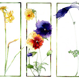 columbine, pansies and narcissus rendered in acrylic, on paper