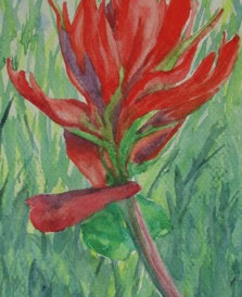 """Indian Paintbrush, watercolor, 5"""" x 7"""", SOLD"""