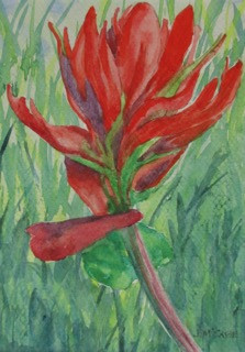 "Indian Paintbrush, watercolor, 5"" x 7"", SOLD"