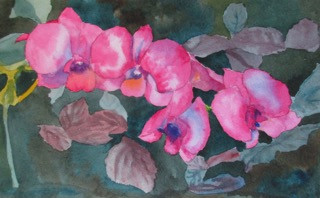 "Orchids of Hawaii, watercolor, 6"" x 10"", SOLD"