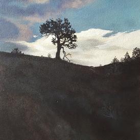 """Lonesome Pine"" 8"" x 14"" acrylic on 1/2"" MDO panel"