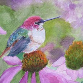Anna's Hummingbird Baby on Coneflower Watercolor 15x15