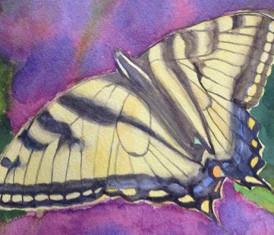 """Monarch Butterfly, watercolor, 5.5"""" x 7.5"""", $100."""