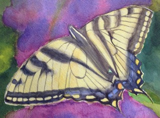 "Monarch Butterfly, watercolor, 5.5"" x 7.5"", $100."