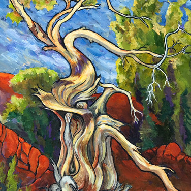 Bristlecone Pine (800 Years to Perfection), acrylic, 16 x 20