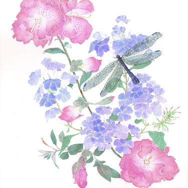 "Plumbago auriculata    ""Imperial Blue""               and Rhododendron     atlanticum     ""Dwarf azalea""           with Odonata dragonfly        acrylic on paper"