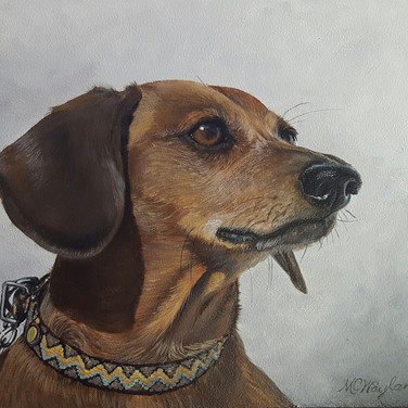 """Dachshund"" 10"" x 12"" acrylic on panel"