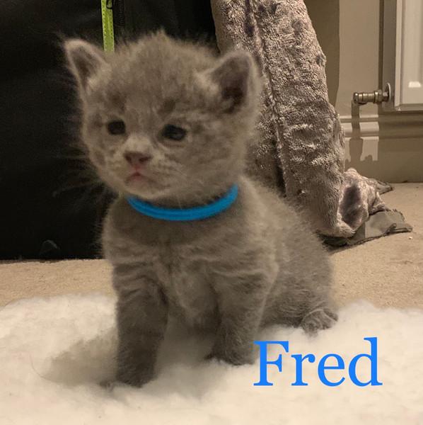 Lapocka Alfred-Aster aka Fred