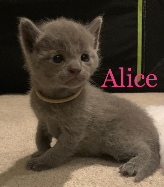 Lapochka Alicia-Rose aka Alice
