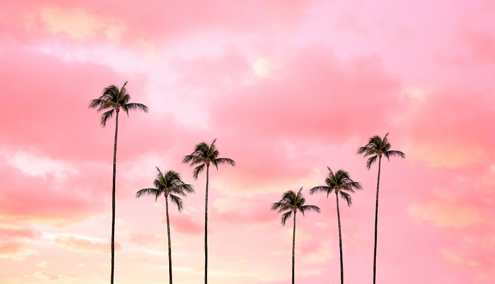 palm-trees-photography-hot-pink-sunset-s