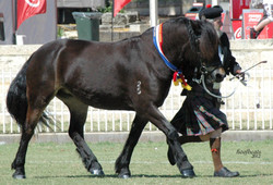 Currie Park mare