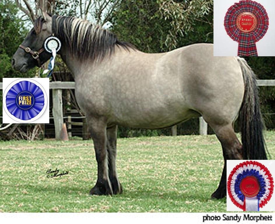 Supreme Highland Pony