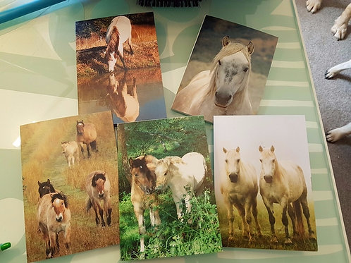 Set of 5 Highland Pony cards - 4x6 inch portrait