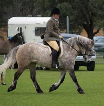 Reserve Champion Ridden Highland