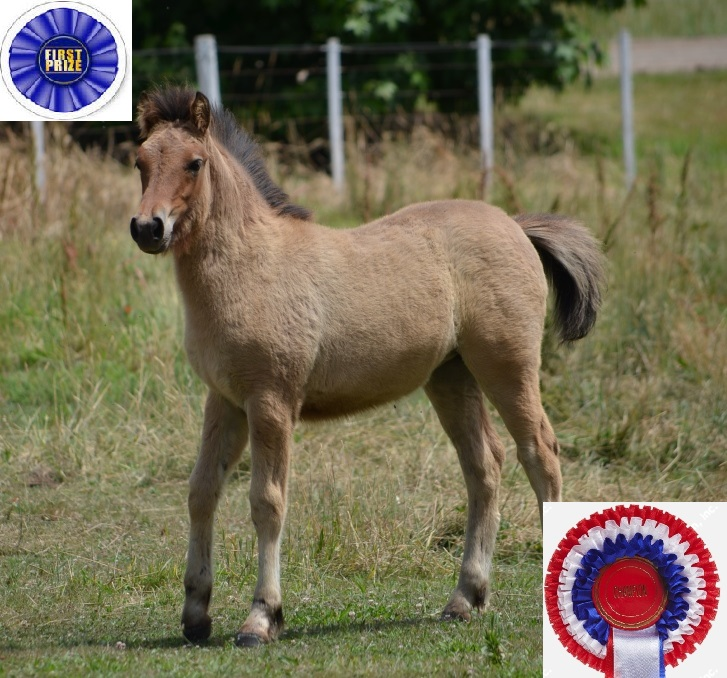 Champion AHL foal