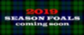 2019 season foals.png