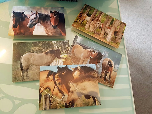 Set of 5 Highland Pony cards - 4x6 inch landscape