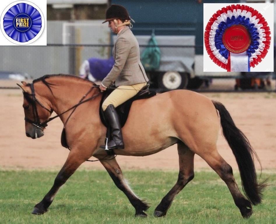 Champion Ridden Highland
