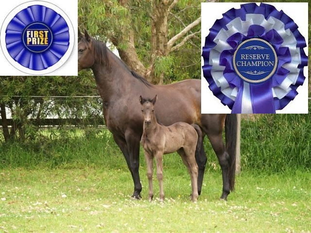 Reserve Champion Partbred Foal