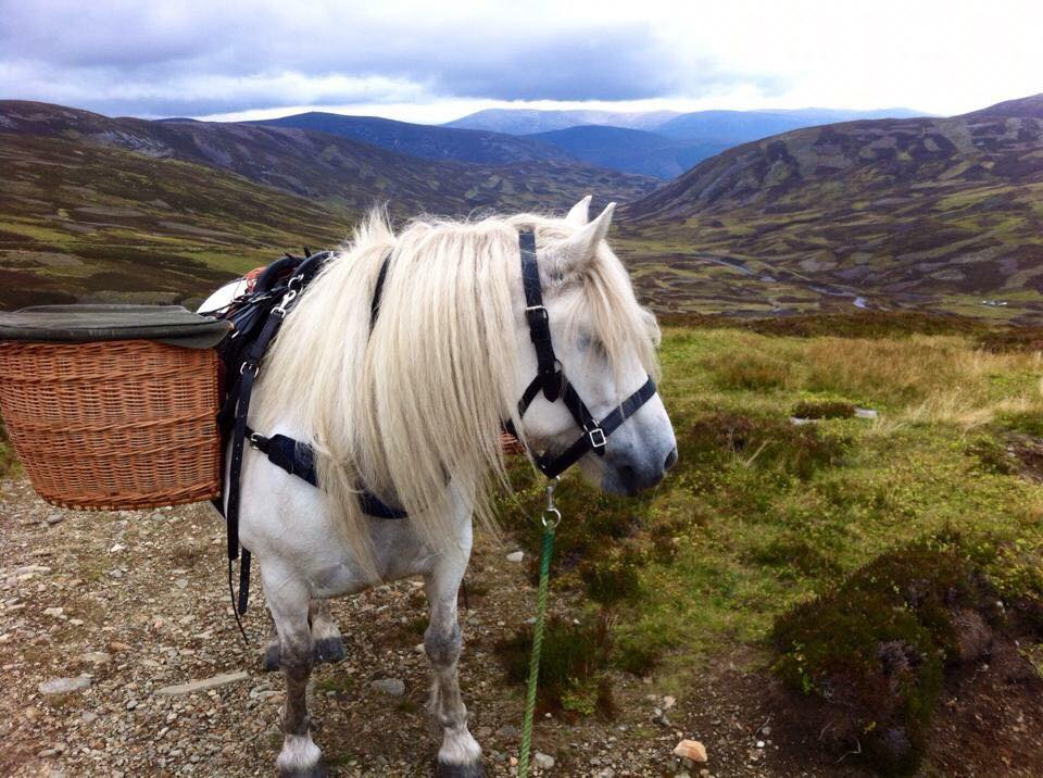 pony in panniers