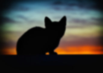 animal-art-backlight-backlit-219958.jpg