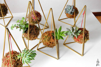 Pirâmide com mini suculenta