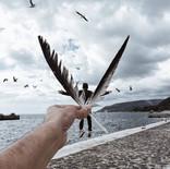 Human Seagull