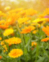 Blurred summer background with growing f