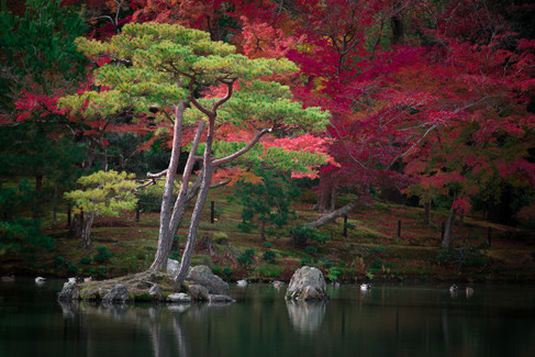Autumn In Kyoto (1 of 11).jpg