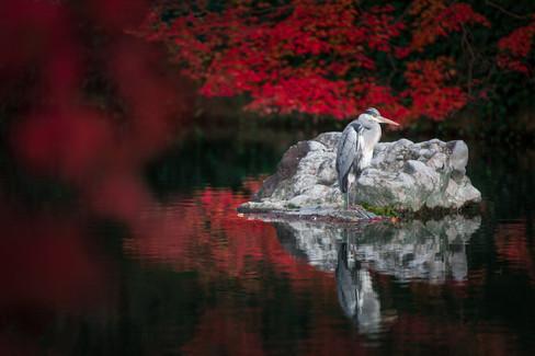 Autumn In Kyoto (9 of 11).jpg