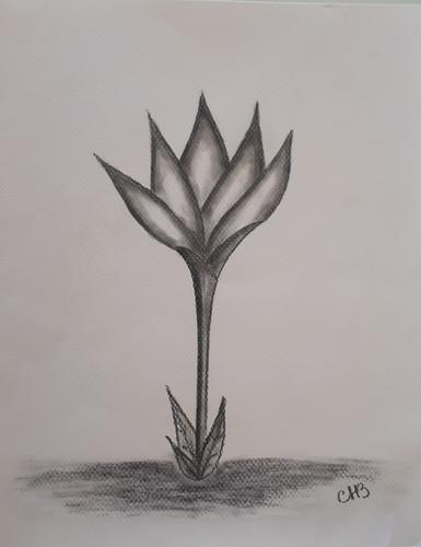 Flor Negra