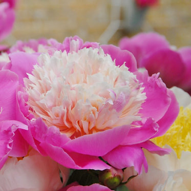 PEONY BOWL OF BEAUTY - БОЖУР
