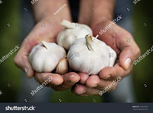 stock-photo-hands-holding-clove-organic-