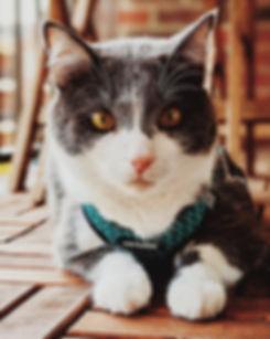 Cat Harness.jpg