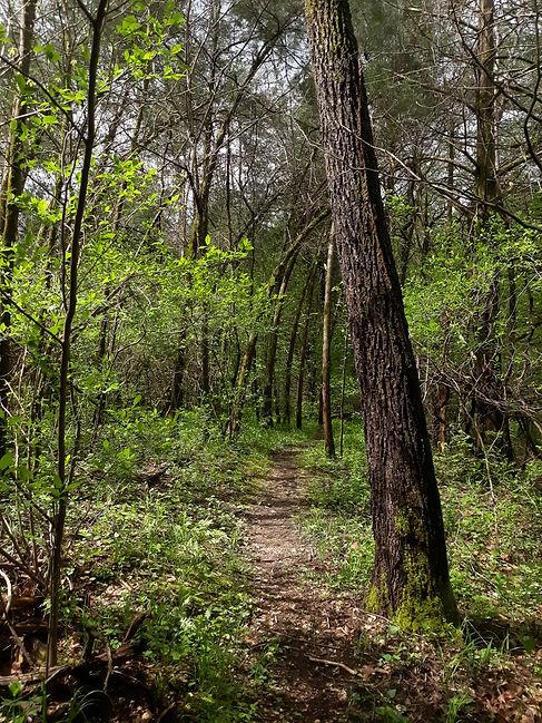 Mature Forest.jpg